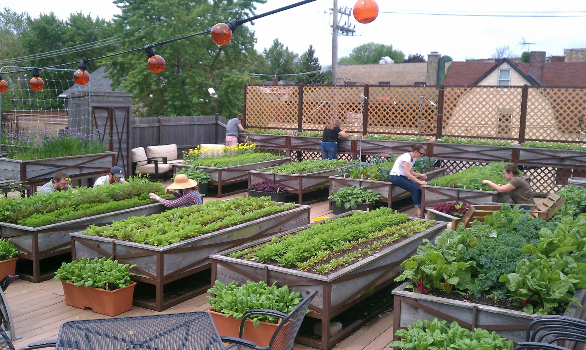 Cool environment friendly ideas for your rooftop for Garden planting designs