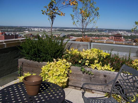Rooftop Garden Plants
