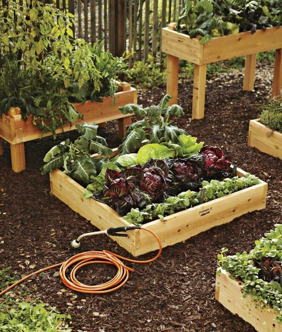 A vegetable garden is always a good choice for a backyard garden