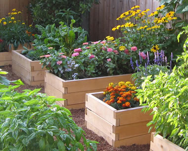 Raised flower beds in the form of boxes filled with good soil