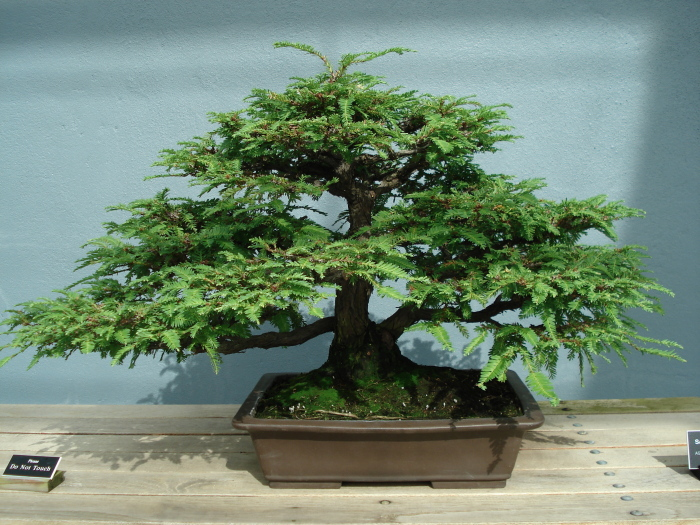 Bonsai is a Japanese art