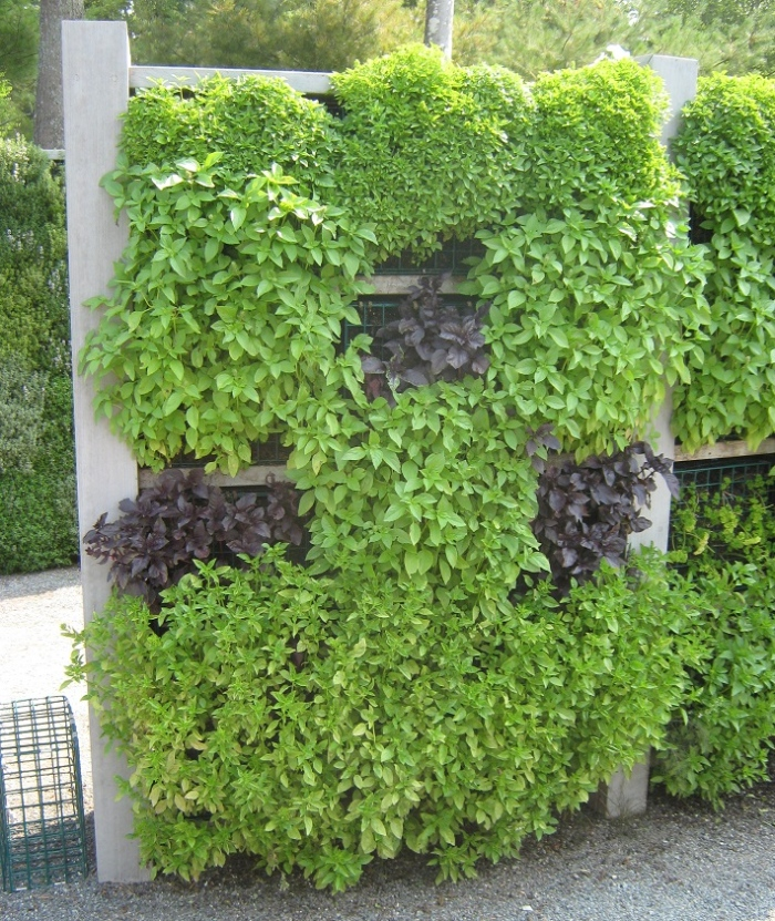 Plants planted vertically on the exterior walls of the house