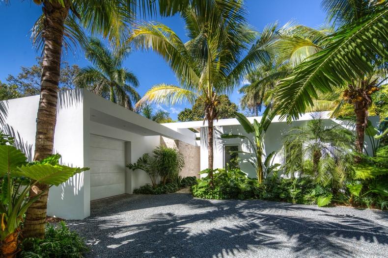 Variegated coconut trees