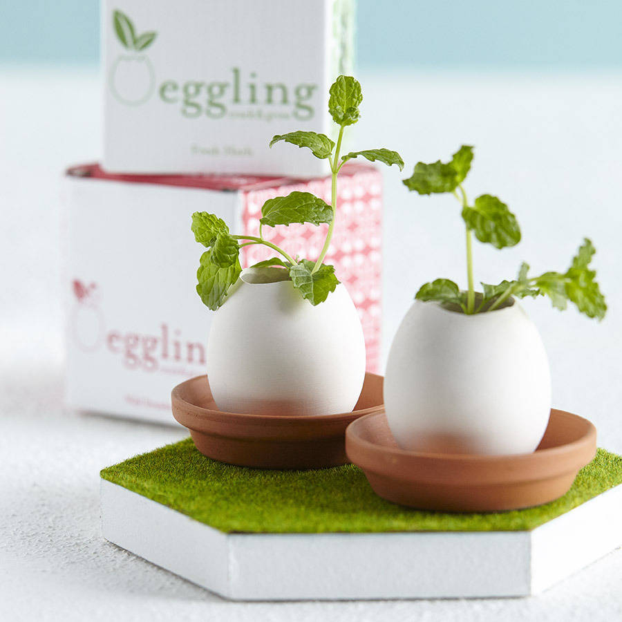 Cutesy egg shell pots